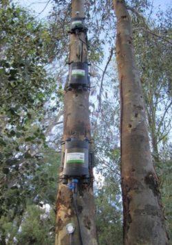 PSY1 Stem Psychrometers and SFM1 Sap Flow Meters