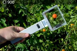 ci-900 Monitoring Ethylene for Fruit Ripening