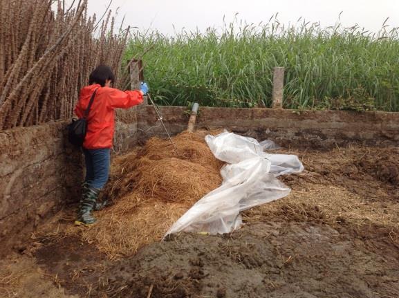 TO-1 Compost Temperature