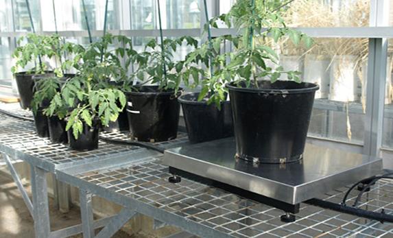 PWS-100 PlantScale